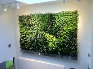 Mur végétal particulier boulogne billancourt 92